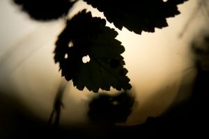 the edges of the day ©TW 2014-2015 18.jpg